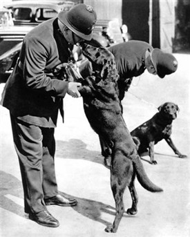 two London policemen with the first Metropolitan police dogs in 1938