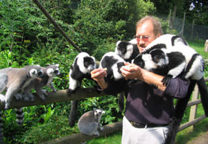 Dudley Zoo Lemur Walk