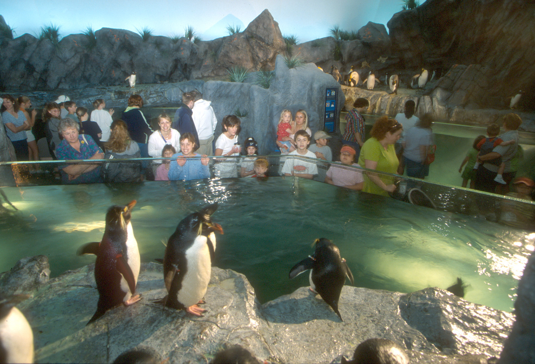 PGAV Destinations St Louis Zoo Penguin and Puffin Coast