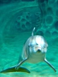 AT&T Dolphin Tales Georgia Aquarium