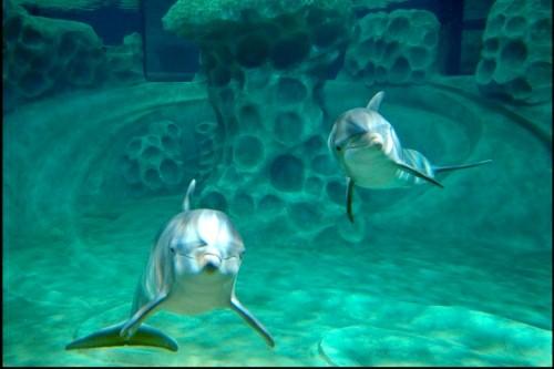 AT&T Dolphin Tales Georgia Aquarium dolphin