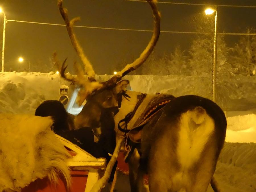 reindeer kissing Roland