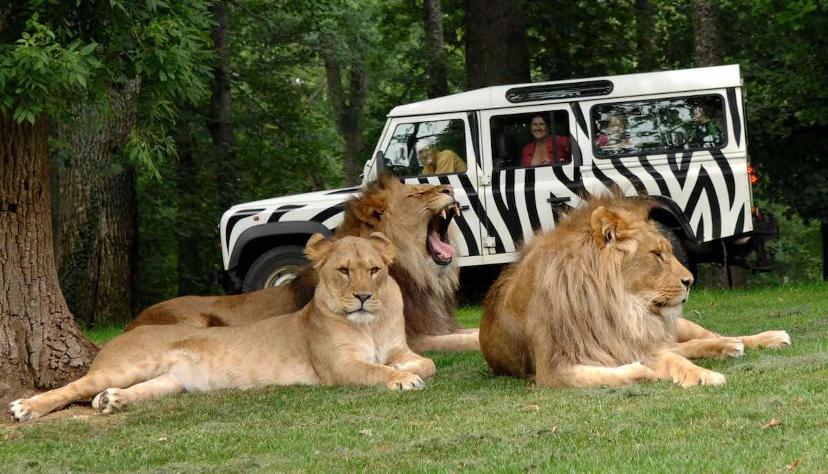 thee lions at longleat forrec masterplan