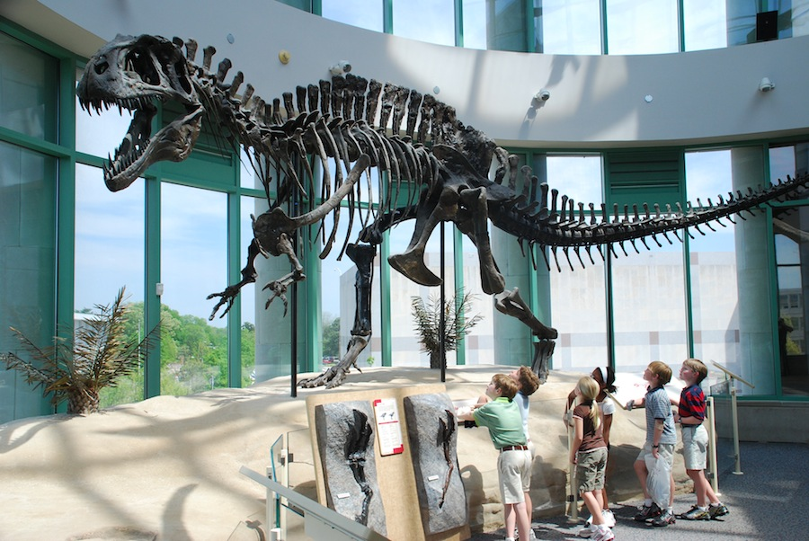 Where To Park At Natural History Museum Raleigh