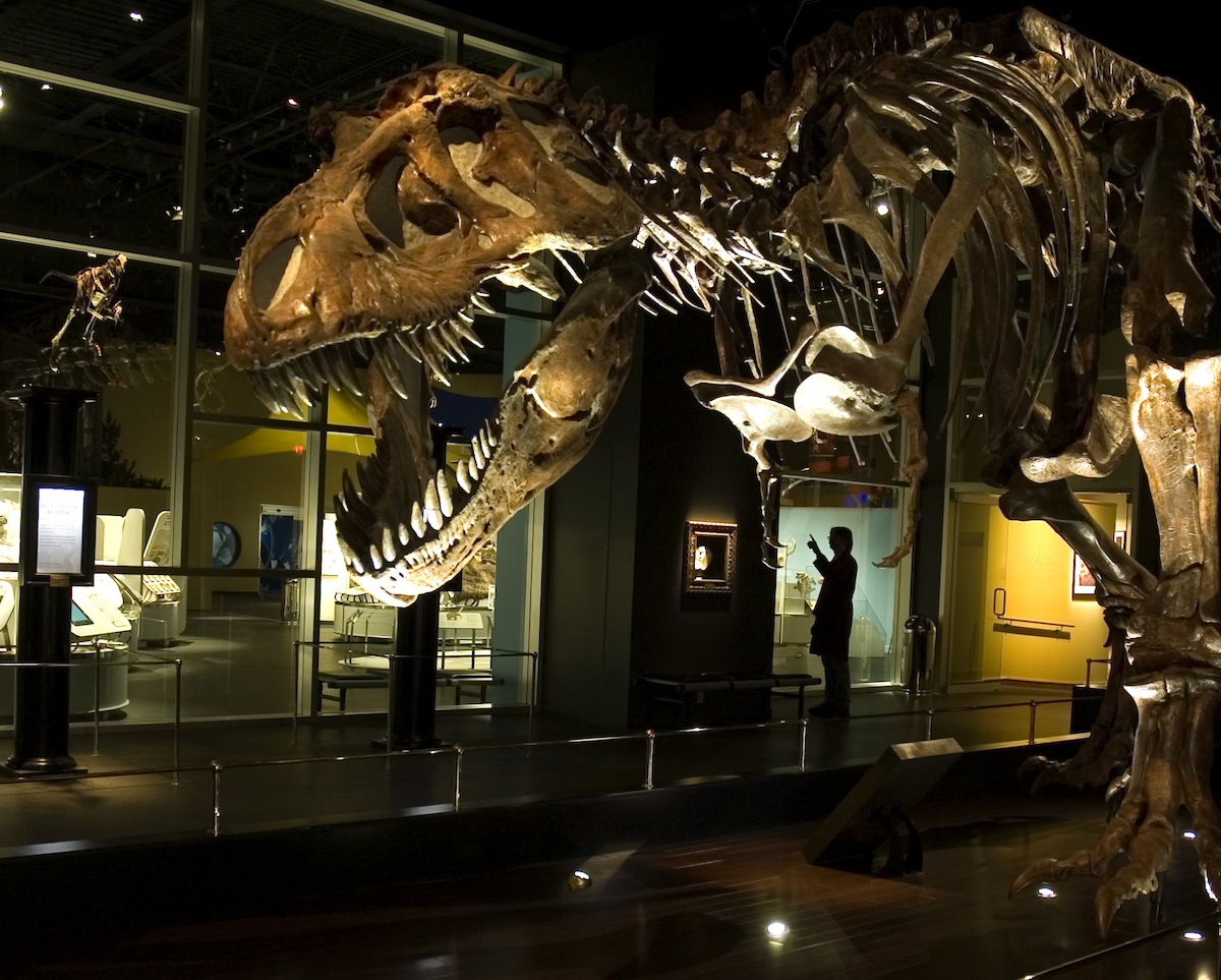 Image result for Royal Tyrrell Museum in Alberta at Canada
