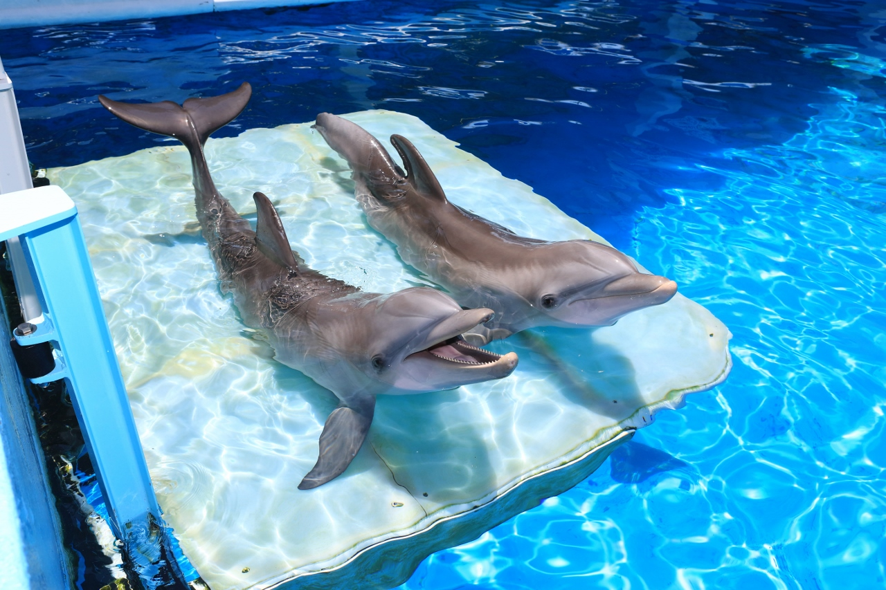 A Winters Tail The Dolphin That Saved Clearwater Marine Aquarium Wiring Books Blooloop