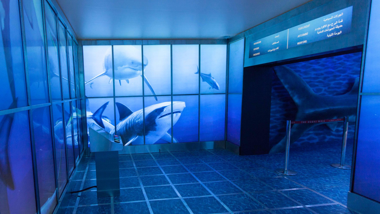 Dubai shark week гоп стоп дубай слушать кто поет