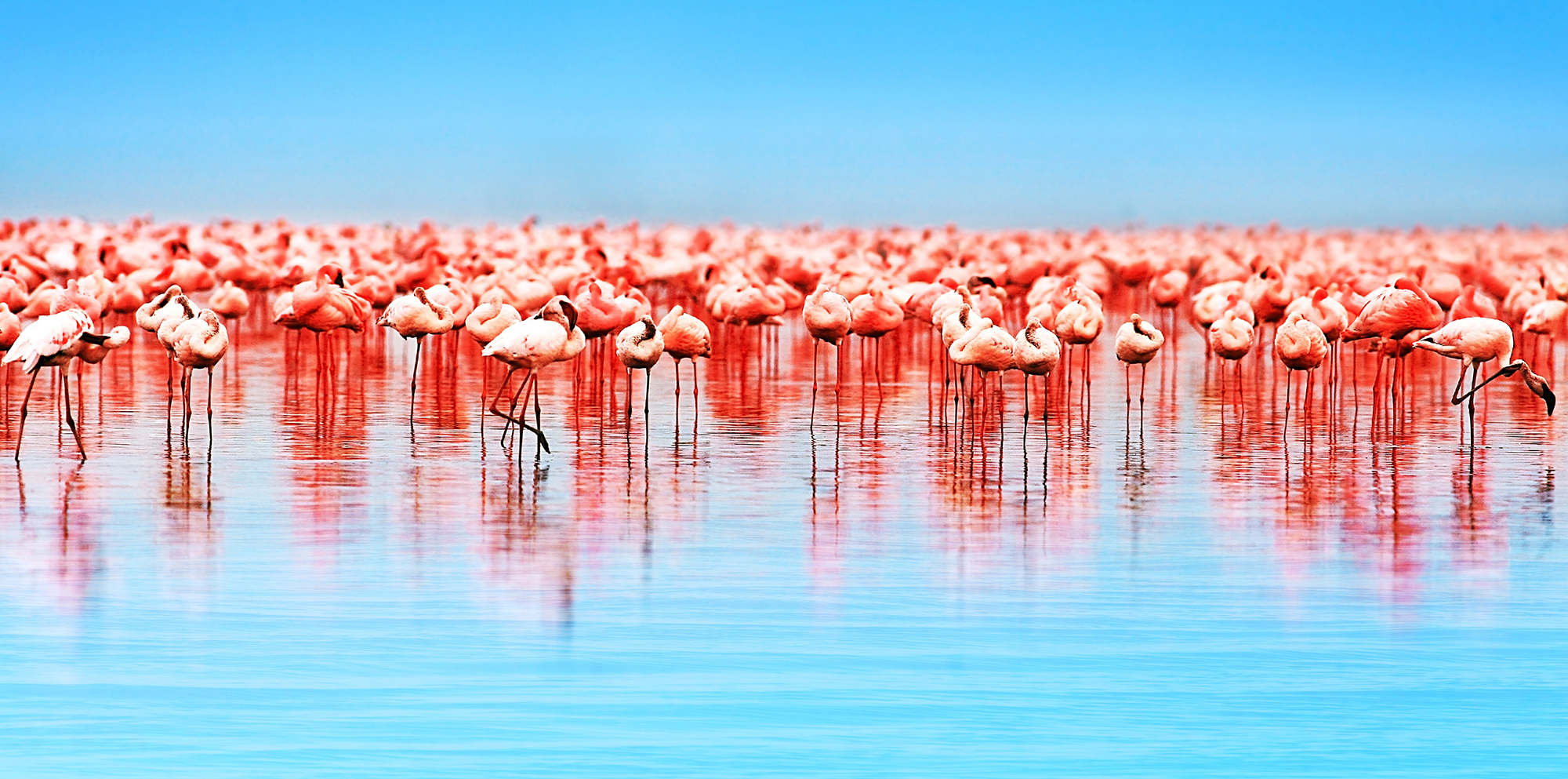 flamingo pgav destinations nature