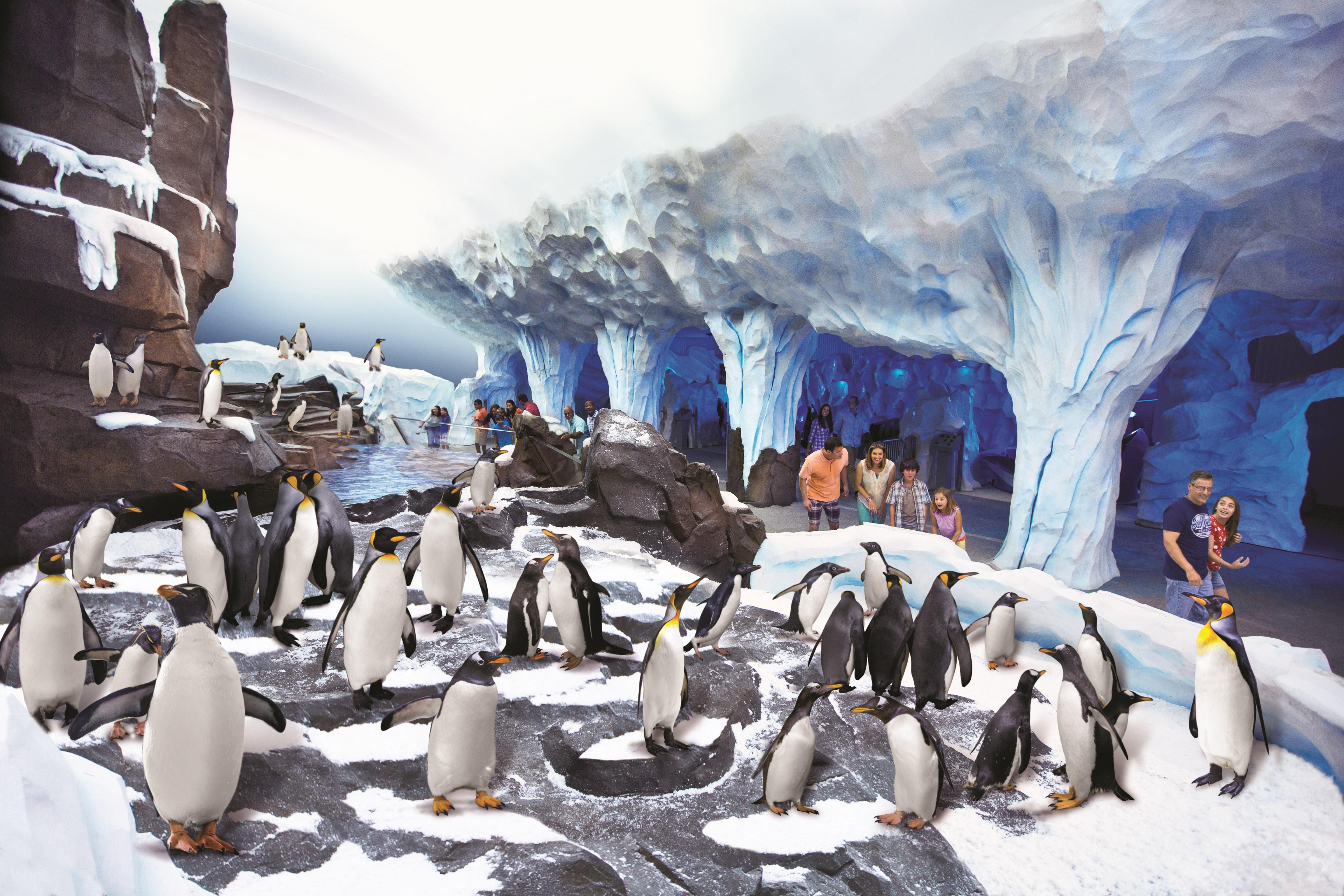 seaworld penguin habitat pgav destinations