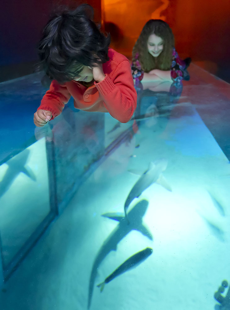 Shark Walk sealife london