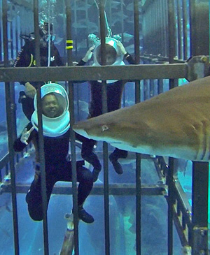 shark-encounter-cage-shark-feeding-dubai-aquarium