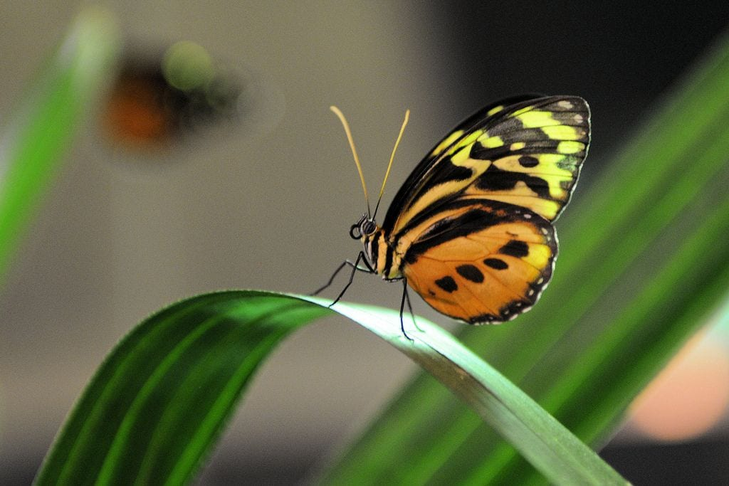 butterfly exhibtion at the american museum of natural history new york