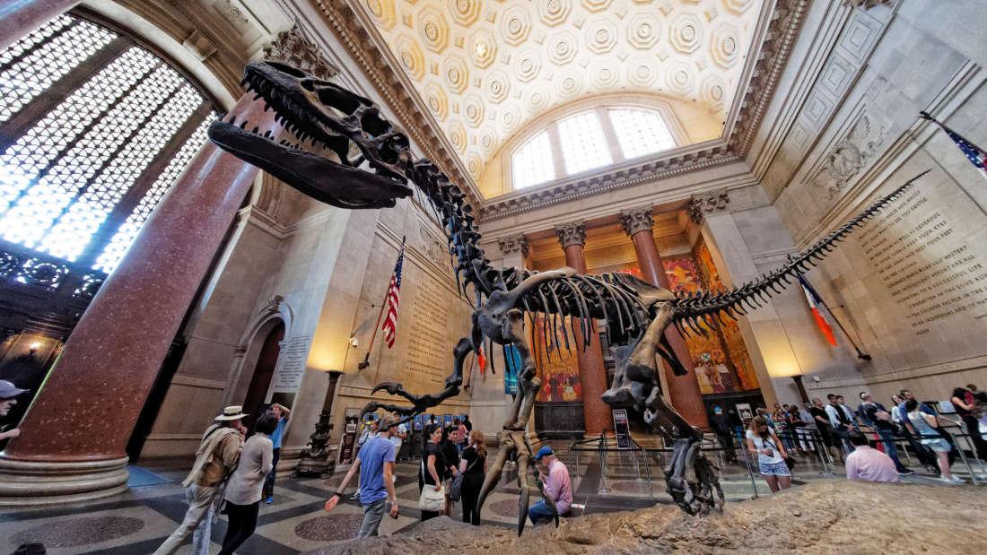 dinosaur skeleton at the american museum of natural history