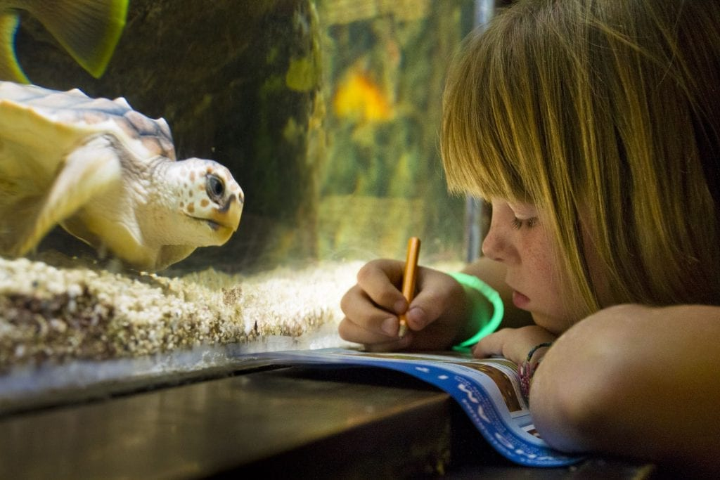 girl in aquarium takes notes looking at turtle