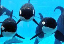 SeaWorld Zhonghong Group