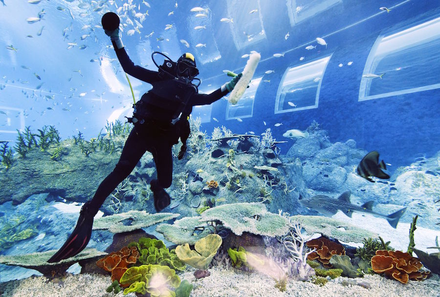 s.e.a. aquarium diver cleans open oceans tank