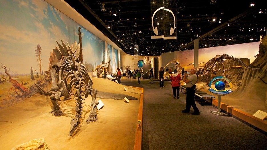 royall tyrrell museum interior