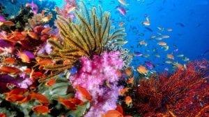 European Coral Reef Symposium (ECRS) 2017