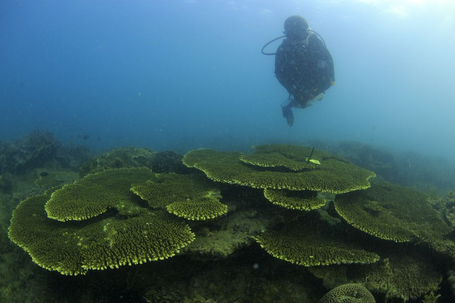 diver hovers over green coral reef florida