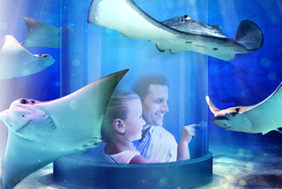 father and daughter view Stingray at newport aquarium copy
