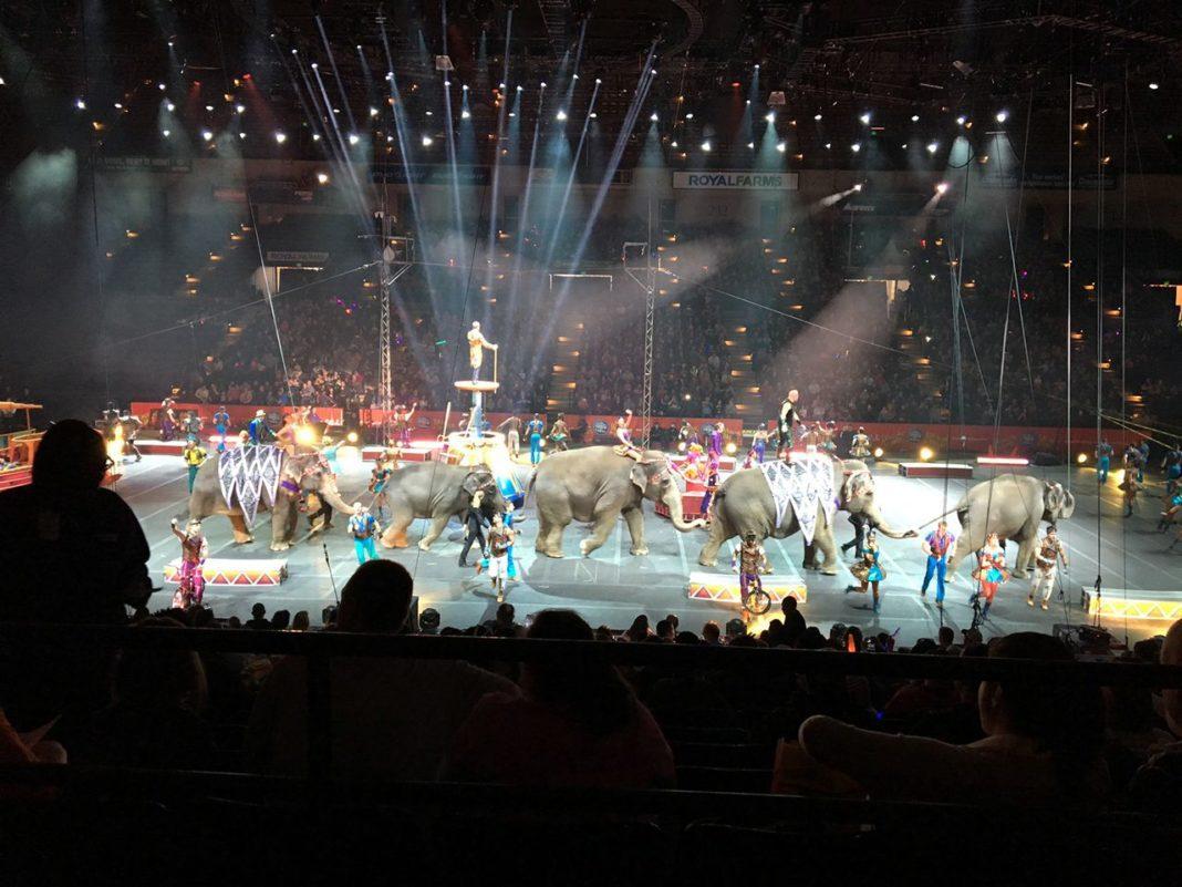 ringling brothers Barnum & Bailey elephant circus