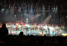 ringling brothers Barnum & Bailey elephant circus