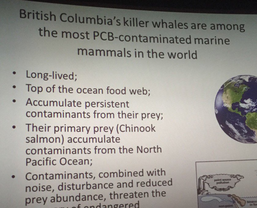 killer whales and pollutants