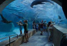 pgav Mississippi Aquarium walls gulfport Blooloop