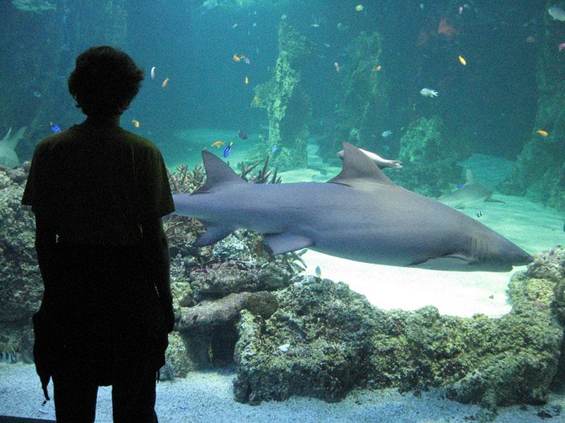 Ellimac-Enileuqcaj-shark trust