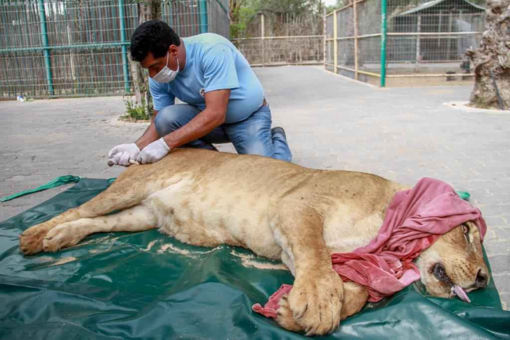 FOUR PAWS Helps Stricken Animals in Ruins of Mosul Zoo