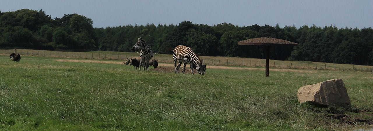 Rhino Section, wildebeest, zebra and ostrich knowsley