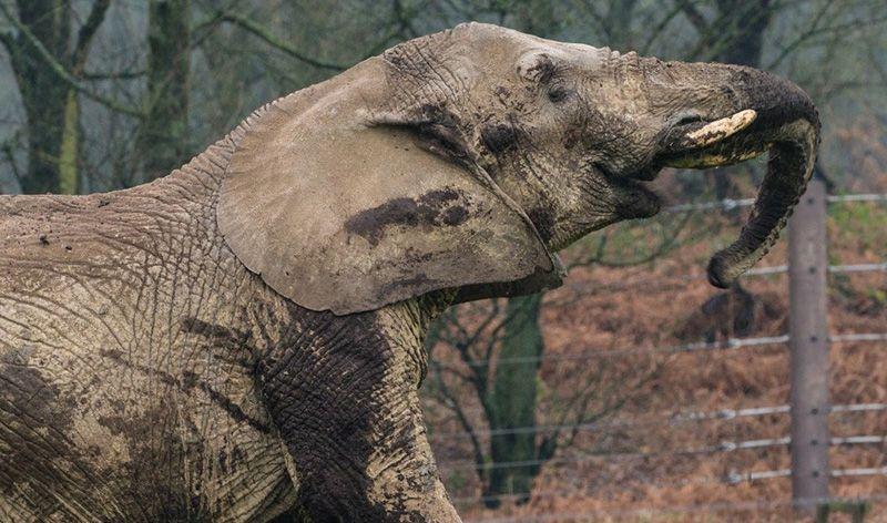 elephant knowsley