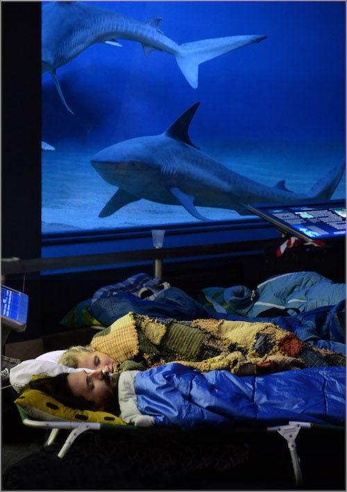 Sleepover with sharks at amnh