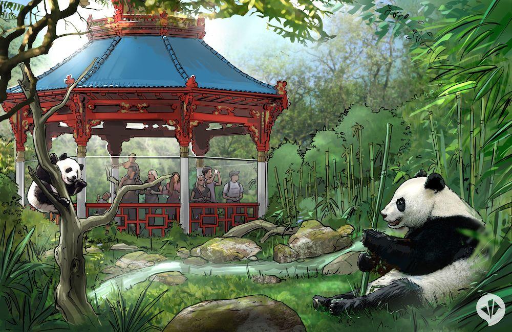 giant pandas at panda garden zoo berlin
