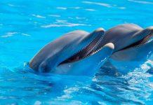 Vancouver Aquarium. cetaceans, whales and dolphins. Ocean Wise.