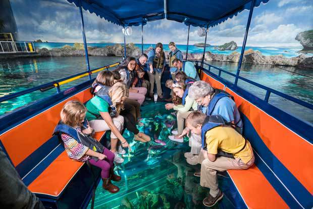 Glass Bottom Boat Tours In Florida