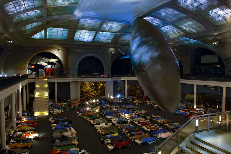 sleepover at american museum of natural history with whale