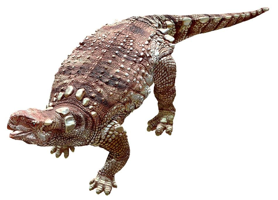Kunbarrasaurus from dinosaur canyon australian age of dinosaurs