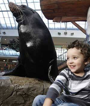 West Edmonton Mall, Sealions and Marine Life FORREC
