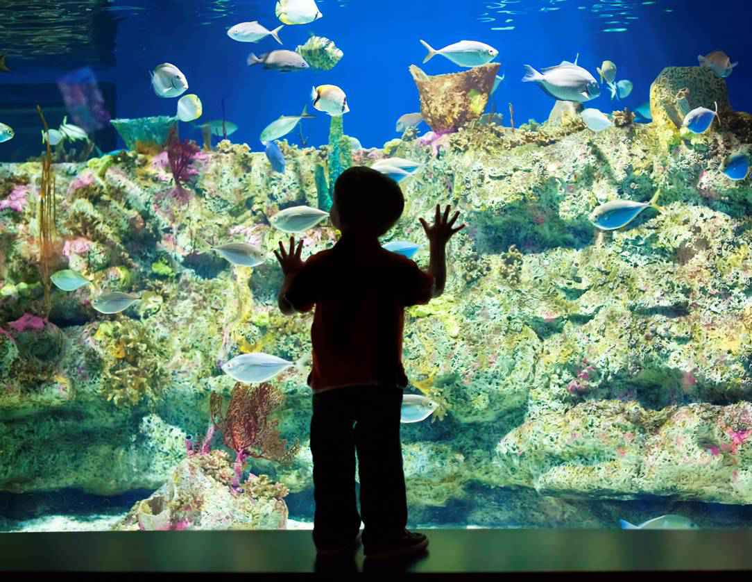 Fort Fisher NC Aquarium keen to dive into $10 million expansion project