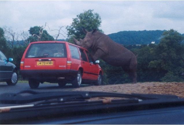 Volvo v Rhino West Midlands Safari Park balppa marketing seminar