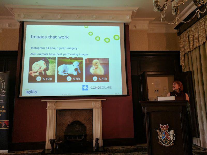 anita waddell cute fluffy animals balppa marketing seminar (1)