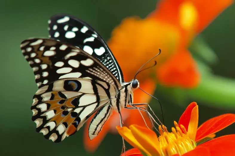 Ramoji Film City butterfly garden