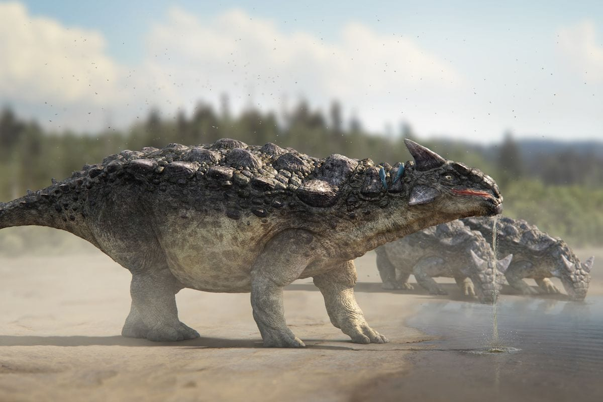 Dinosaurs in the Wild reveal a Drinking Ankylosaurus copy