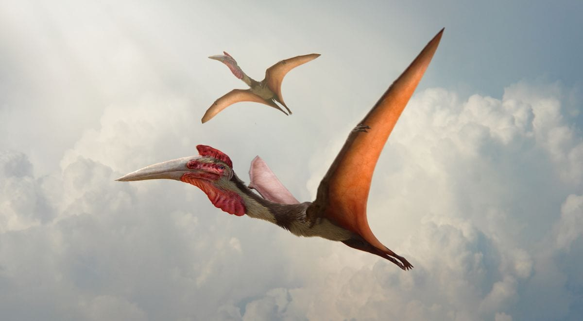 Dinosaurs in the Wild reveal a Pair of Quetzalcoatlus