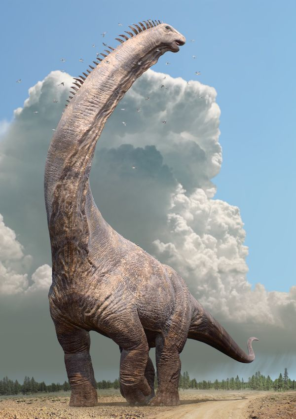 Dinosaurs in the Wild reveal a female Alamosaurus copy
