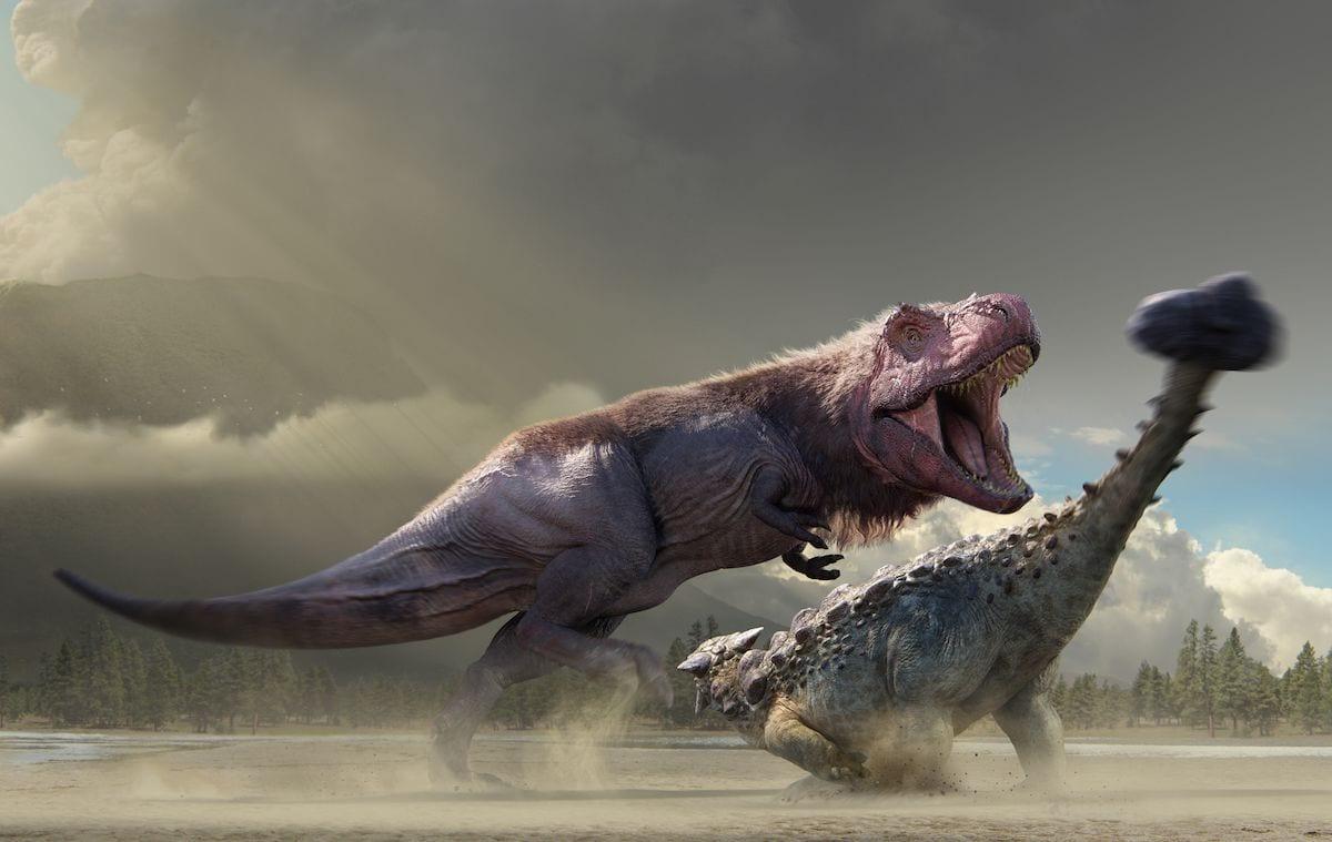 Dinosaurs in the Wild reveals a Tyrannosaurus fighting an Ankylosaurus copy