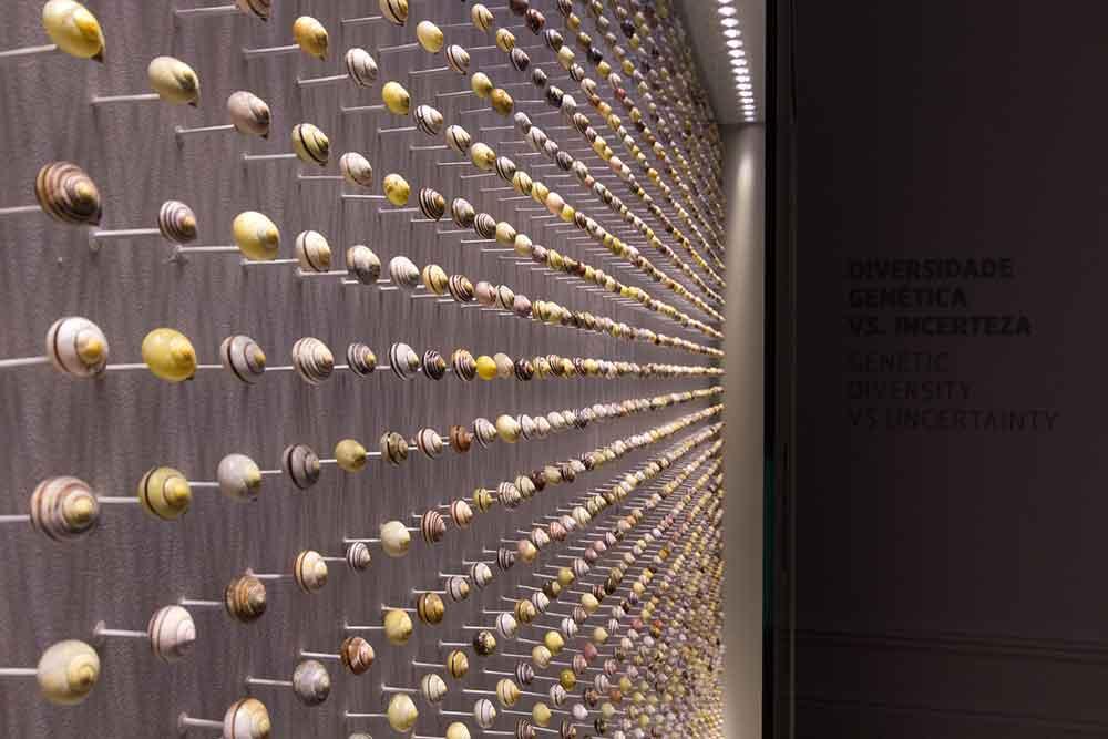 snail shells ecsite