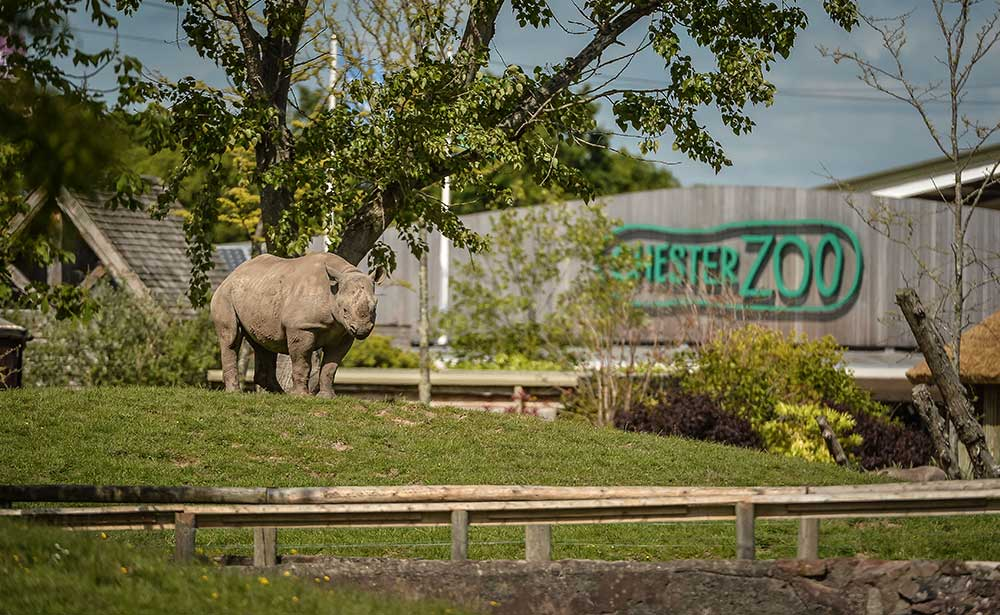 chester zoo rhino 2030 vision