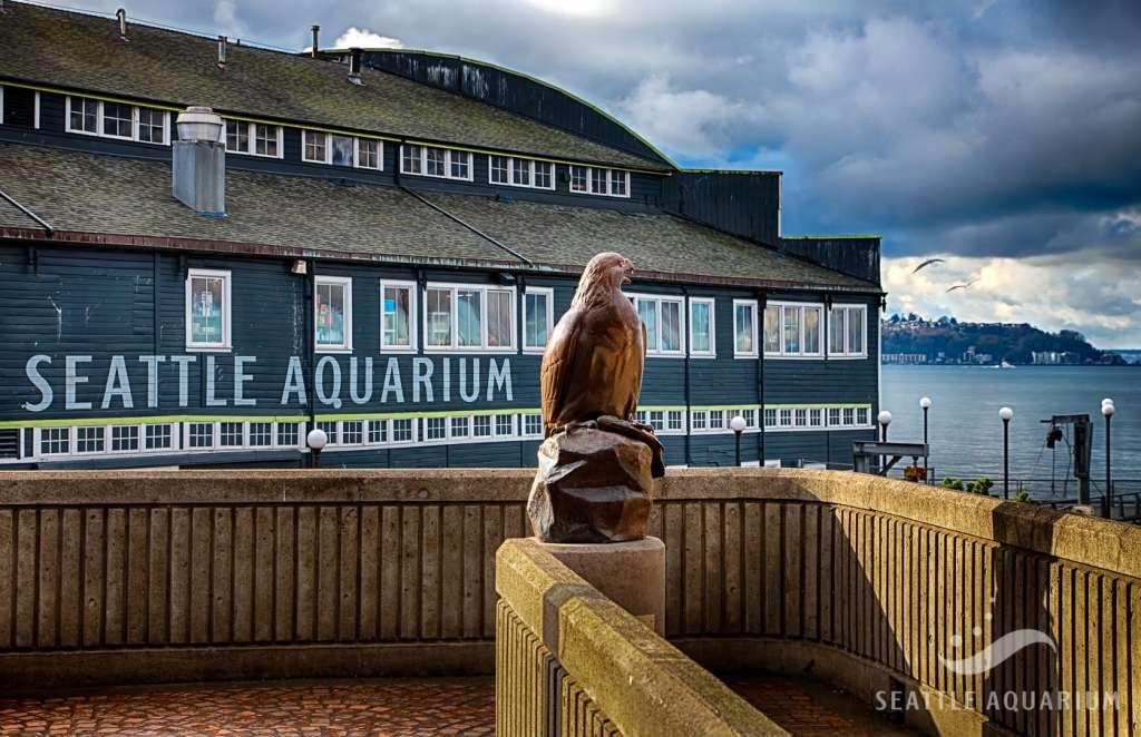seattle aquarium expansionbird of prey
